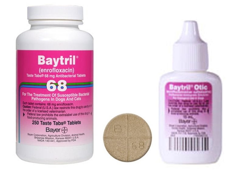 What Is Baytril Used To Treat In Dogs